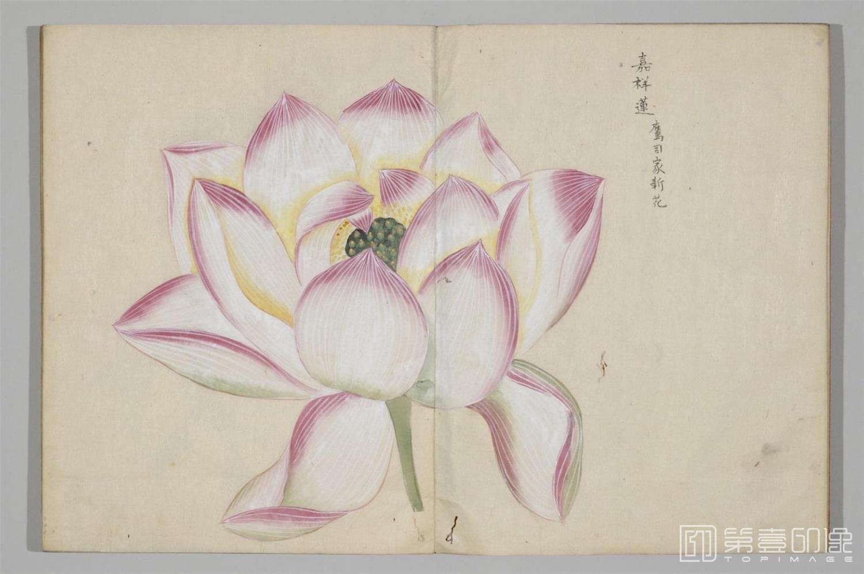 国画-清香画谱-0033