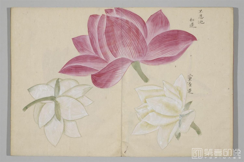国画-清香画谱-0034