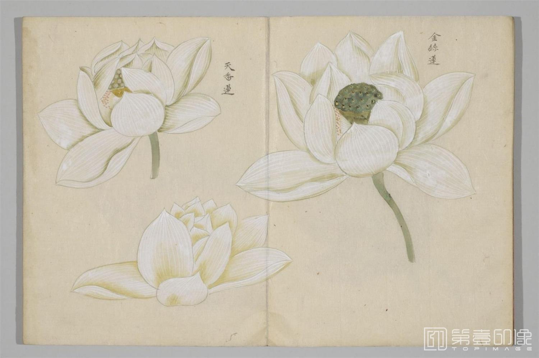国画-清香画谱-0036