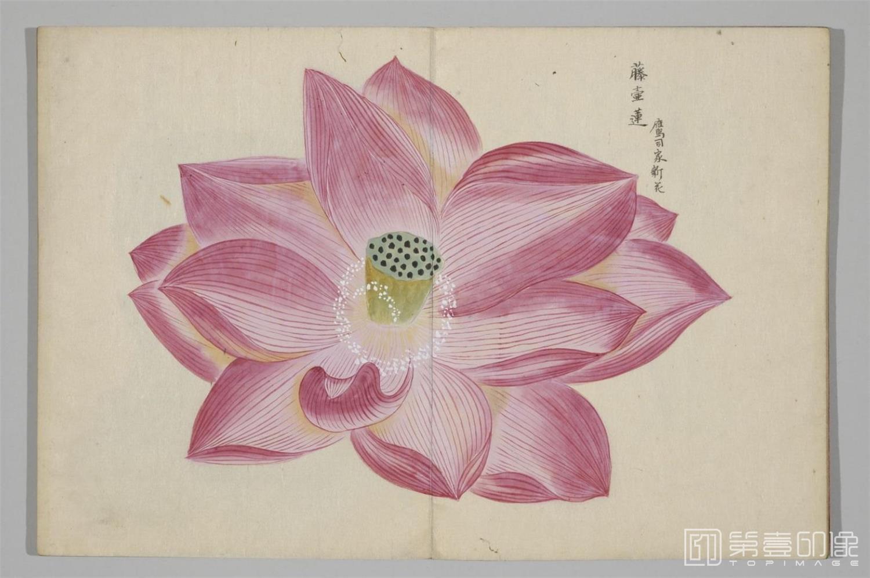国画-清香画谱-0037