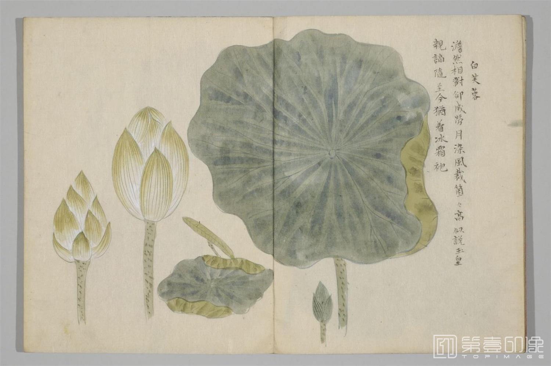 国画-清香画谱-0039